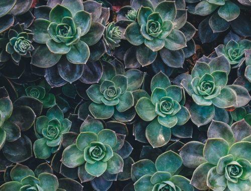 Best Indoor Plants For Your Home