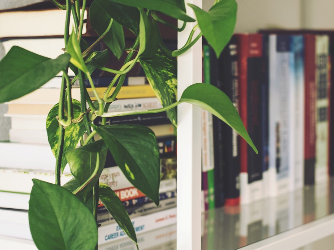 Hygge books and plants