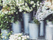 Inddor Plants